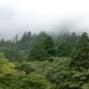 15: 日本で乳腺外科へ