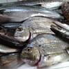 只今到着!本日の漁港直送の天然鮮魚たちo(^o^)o