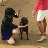 JKC神戸甲南全犬種クラブ展 in 三木〜カランカラン空回リ〜(>人<;)