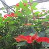 温室の中で咲く花