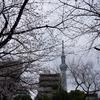 2019/03/28 墨田公園お花見
