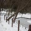 小山田緑地の雪景色