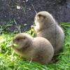 デジカメ散歩 IN 上野動物園《古澤郁子さんの作品》