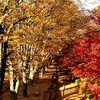 「さらば紅葉の秋 アキレンジャーよ永遠に(来年まで)」