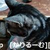 2018/12/05写真 猫スズ(すず) KIMG0239