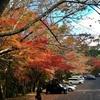 綺麗な紅葉スポットで登山してきました。