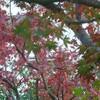庭の紅葉と つぶやきと
