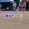 ぽつんと1テント Ver.2(NDA編) 4