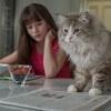『メン・イン・キャット』感想。ネタバレ。バカと猫とCEOは高いところが好き