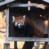 横浜の人気スポット、野毛山動物園のオススメポイントを紹介します!