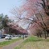 道内随一の桜の名所「二十間道路桜並木」をフジノンレンズXF10-24 F4.0 R OIS で撮って来た。