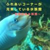 ふれあいコーナーが充実〜越前松島水族館〜