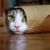 『恵方巻』の本当の意味って知ってる?ワシは恵方巻を食べてる人たちを凄くエロい目で見ます。(笑)