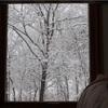 雪の朝とねこ