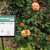 些事かげん「広島平和記念資料館」