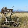 【野付半島】トドワラ散策所要時間は? 網走~尾岱沼北海シマエビの旅④
