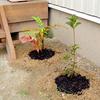 小さな苗木植栽~ 玄関・車庫周辺 ~