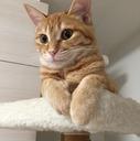 茶トラ猫のアフィリエイト@はてな3ヶ月目