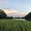 再び 石神井公園 夕方散歩