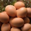 筋トレ中のたんぱく質摂取には「完全栄養食品」である卵が最強