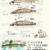 中濃の野池群(岐阜県)