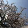 桜、外出、マスク、無限の岐路。
