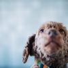 販促と捨て犬問題の解決を両立!イスラエル発の見事なキャンペーン - Samsung Adoption package