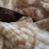 毛布と同化。