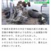 千葉県木更津沖のB-29の脚