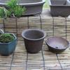 赤松盆栽の鉢探し