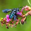 南阿蘇「幸せ呼ぶ青いハチ・ブルービー」どんな幸せを呼ぶの?