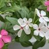 タネを植えて育てるように、ブログをコツコツ書いてみる。将来の収穫を信じて。