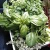 生野菜 鮮度の悩みを解決します@doTERRA植物系総合ミネラル新潟ドテラ