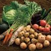 次は野菜でも作るか