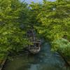 夜の宇治川派流で桜の木の新緑を@2020