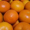 セミノールオレンジという名のオレンジを食べた件