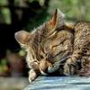 【命を感じる】野良猫でも心が痛みます。心を広く持ちたい!