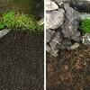 アクアリウム:水草育種のリベンジ&アクアリウムの立ち上げ