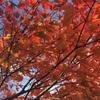 【大分】美しい山の紅葉!日本百名山、九重山へ日帰り登山へ。