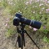 タムロンSP AF 180mm F/3.5 Di LD [IF] MACRO 1:1