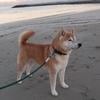 「しゃぼん玉」―柴犬に魅かれて視聴したらいい映画だった(2019.02.27作成)