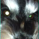 tom's eye