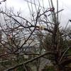 庭いじりの贅沢:梅が咲いた。
