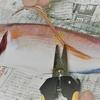 釣った魚のヒレを切りたい!タックルボックスに小さな万能はさみを忍ばせる