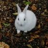 ウサギに…?