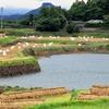 鹿ノ丸堤(長崎県東彼杵)