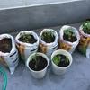 菜園拡大の儀