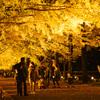昭和記念公園「黄葉紅葉まつり&秋の夜散歩2020」ライトアップされたイチョウ並木と日本庭園