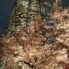 毛利庭園の桜見てきた!
