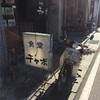 チャボ食堂(下諏訪)